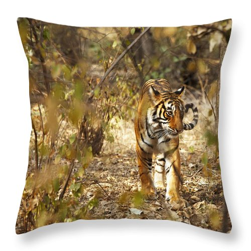 India! Indian Throw Pillow featuring the photograph Tiger In The Undergrowth At Ranthambore by Axiom Photographic