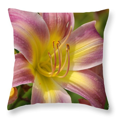 Tiger Lilly Throw Pillow featuring the photograph Tiger Lilly by Grace Grogan