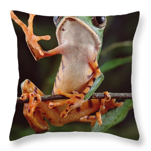 Mp Throw Pillow featuring the photograph Tiger Striped Leaf Frog Waving by Claus Meyer