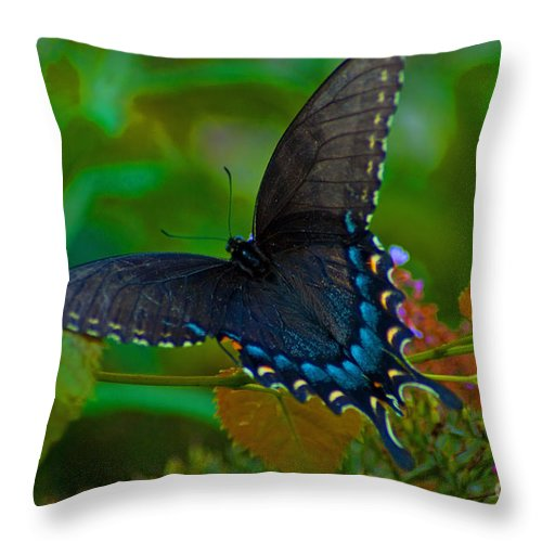 Blue Throw Pillow featuring the photograph Tiger Swallowtail Butterfly Female by Stephen Whalen