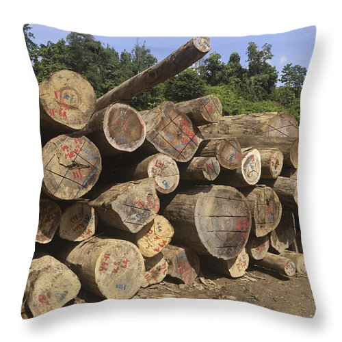 Mp Throw Pillow featuring the photograph Timber At A Logging Area, Danum Valley by Thomas Marent