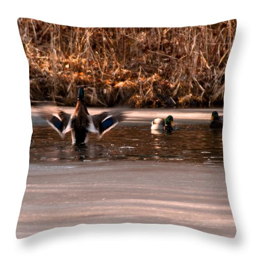 Usa Throw Pillow featuring the photograph Time For Me To Fly by LeeAnn McLaneGoetz McLaneGoetzStudioLLCcom