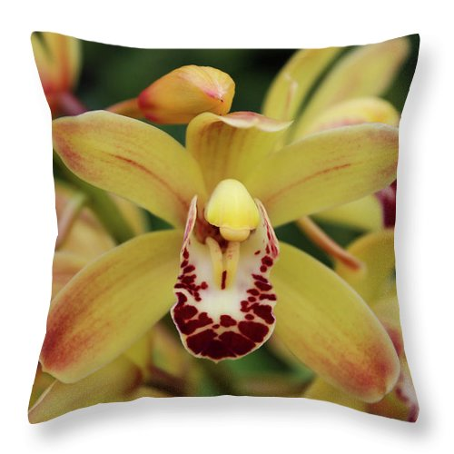 Orchids Throw Pillow featuring the photograph Tiny Dancer by Rachel Cohen