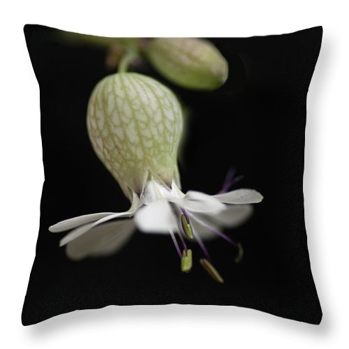 Nature Throw Pillow featuring the photograph Tiny Dancer by Susan Capuano