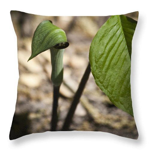 Arisaema Triphyllum Throw Pillow featuring the photograph Tiny Jack In The Pulpit by Teresa Mucha