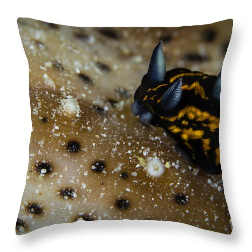 Dorid Nudibranch Throw Pillow featuring the photograph Tiny Nudibranch On Sea Cucumber by Todd Winner