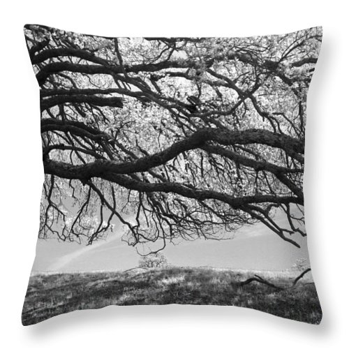 Trees Throw Pillow featuring the photograph To Lie Here With You Would Be Heaven by Laurie Search