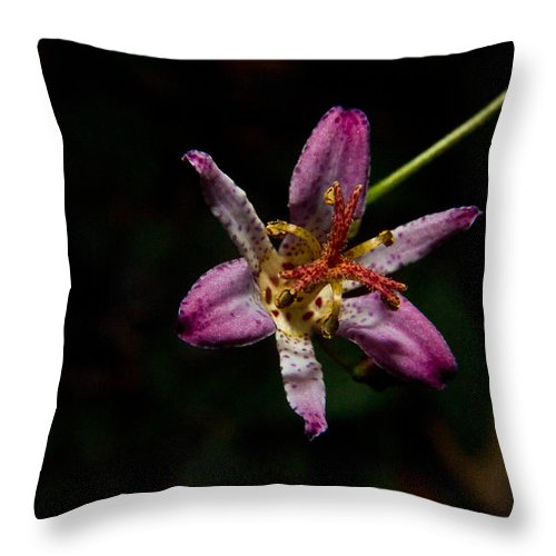Common Throw Pillow featuring the photograph Toad Lilly 2 by Douglas Barnett