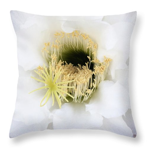 Cactus Throw Pillow featuring the photograph Torch Bloom by Linda Dunn
