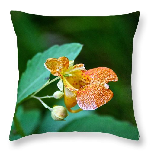 Outdoors Throw Pillow featuring the photograph Touch Me Not by Susan Herber