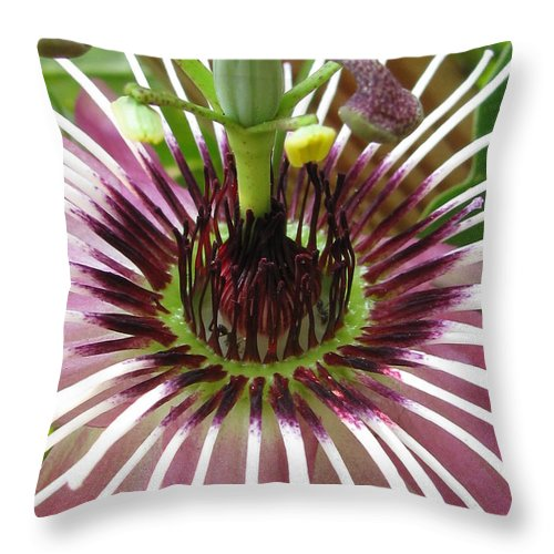 Flower Throw Pillow featuring the photograph Touchable by Tina Marie