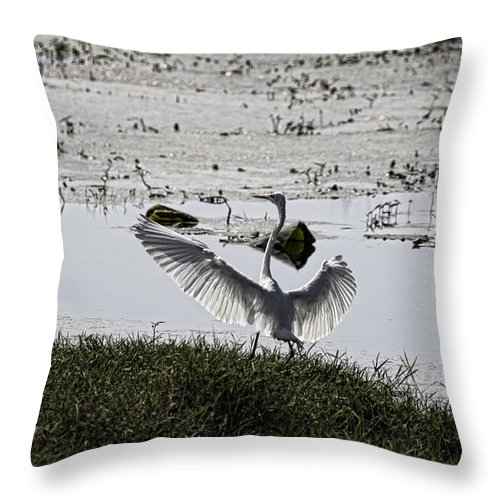 Egret Throw Pillow featuring the photograph Touchdown V2 by Douglas Barnard
