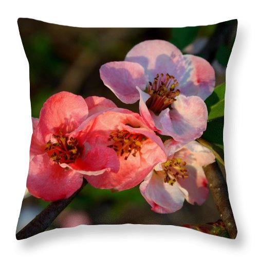Quince Throw Pillow featuring the photograph Toyo Nishiki Quince by Kathryn Meyer