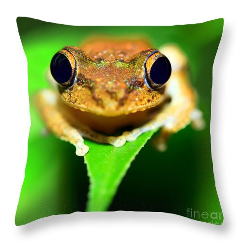 Eyes Throw Pillow featuring the photograph Tree Frog by MotHaiBaPhoto Prints
