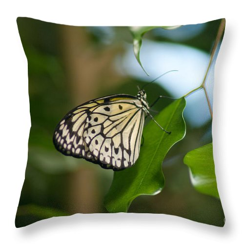 Nymph Throw Pillow featuring the photograph Tree Nymph by Louise Magno