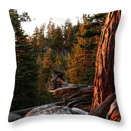Sunset Throw Pillow featuring the photograph Tree Reflections by LeeAnn McLaneGoetz McLaneGoetzStudioLLCcom