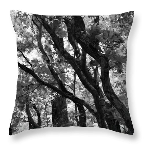 Trees Throw Pillow featuring the photograph Trees Beautiful Trees by Kathy Clark