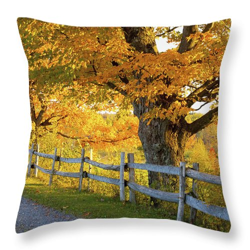 Autumn Colors Throw Pillow featuring the photograph Trees In Autumn Colours And A Fence by David Chapman