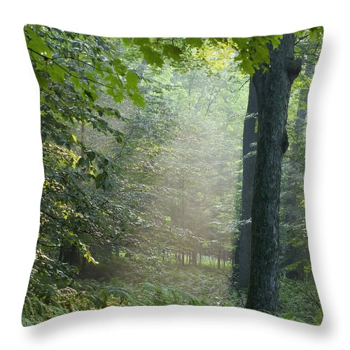 Beam Throw Pillow featuring the photograph Trees In The Woods In The Early Morning by David Chapman