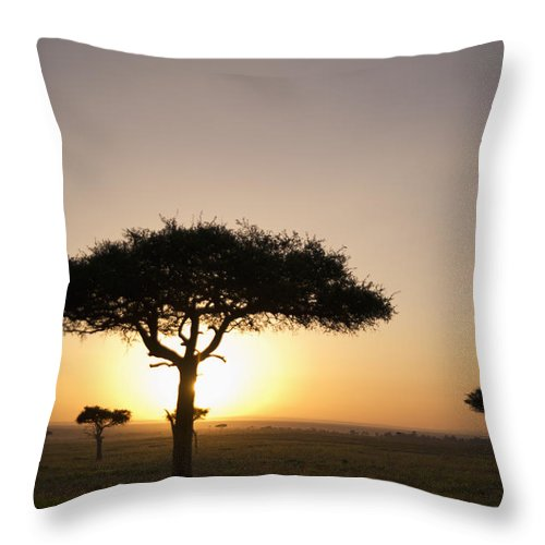 Clear Sky Throw Pillow featuring the photograph Trees On The Savannah With The Sun by David DuChemin
