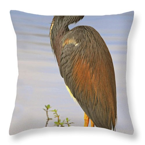 Tricolor Heron Throw Pillow featuring the photograph Tricolor Heron by Dave Mills