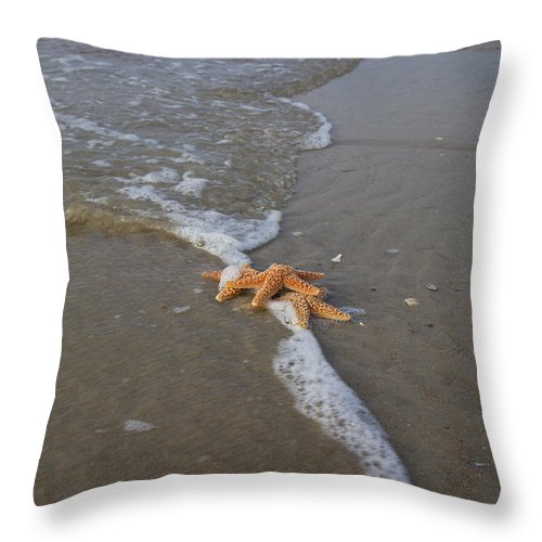 Starfish Throw Pillow featuring the photograph Trio by Betsy Knapp