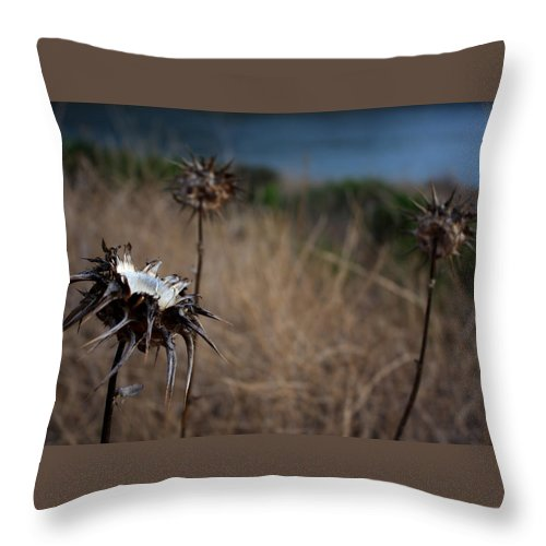Close-up Throw Pillow featuring the photograph Trio Of Thistles by Leonard Sharp