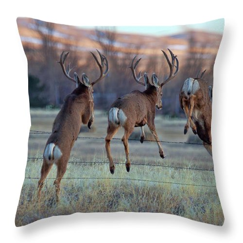 Deer Jumping Phoograph Throw Pillow featuring the photograph Triple Play by Jim Garrison