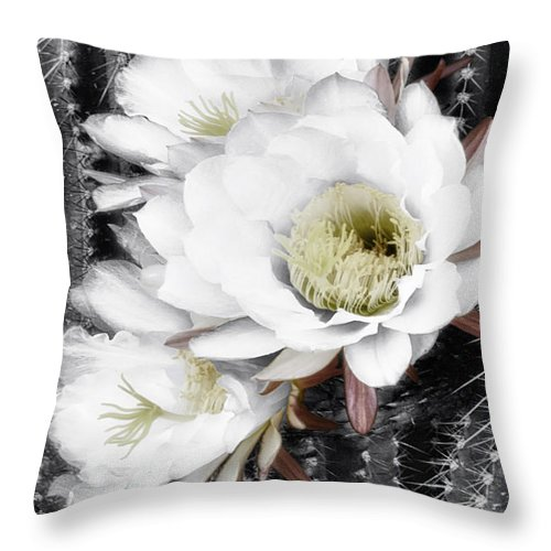 Torch Cactus Throw Pillow featuring the photograph Triple Torch Cactus by Linda Dunn