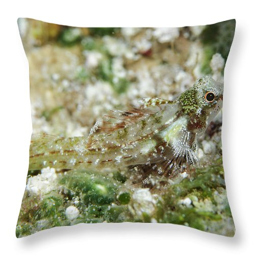 Ocean Throw Pillow featuring the photograph Triplefin, Indonesia by Todd Winner