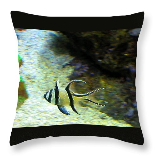 Fish Throw Pillow featuring the photograph Tropical Fish by April Patterson