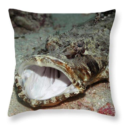 Crocodile-fish Throw Pillow featuring the photograph Tropical Fish Crocodile-fish by MotHaiBaPhoto Prints