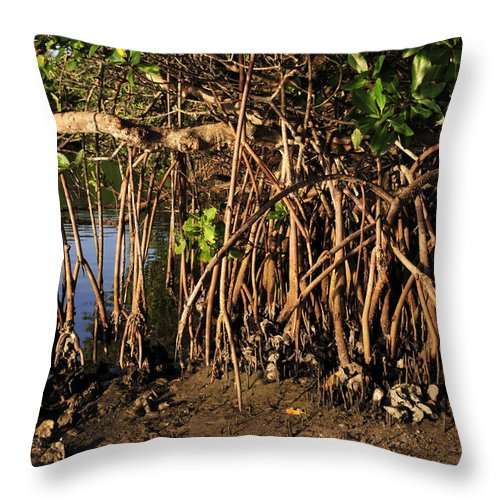 Fine Art Photography Throw Pillow featuring the photograph Tropical Mangroves by David Lee Thompson
