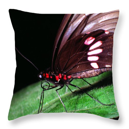 South America Throw Pillow featuring the photograph Tropical Rainforest Butterfly by Thomas R Fletcher