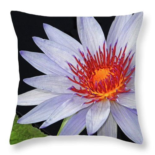 Waterlily Throw Pillow featuring the photograph Tropical Waterlily by Dave Mills