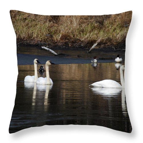 Alaska Throw Pillow featuring the photograph Trumpeter Swans by Doug Lloyd