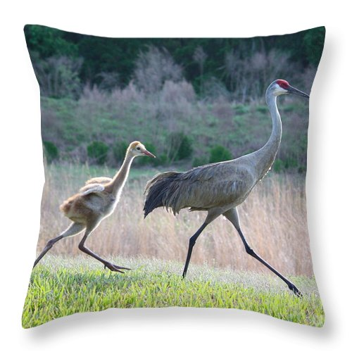 Bird Throw Pillow featuring the photograph Trying To Keep Up by Carol Groenen