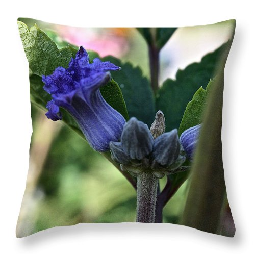Outdoors Throw Pillow featuring the photograph Tube Clematis by Susan Herber
