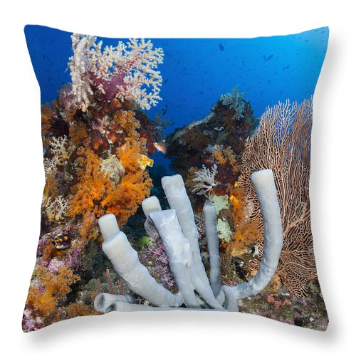Raja Ampat Throw Pillow featuring the photograph Tube Sponge On Coral Reef In Raja by Todd Winner