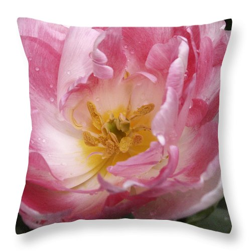 Pink Throw Pillow featuring the photograph Tulip Angelique by Nancy Griswold