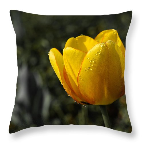 Dew Throw Pillow featuring the photograph Tulip Drops by Lori Coleman