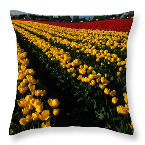 Tulips Throw Pillow featuring the photograph Tulip Fields Forever by Bob Christopher