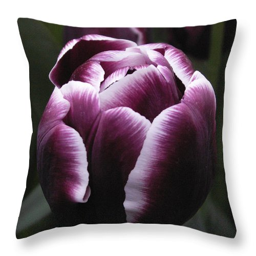 Tulip Throw Pillow featuring the photograph Tulip Gavota by Nancy Griswold