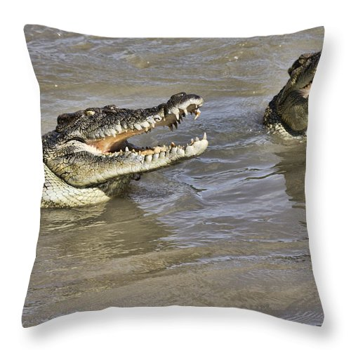 Crocodiles Throw Pillow featuring the photograph Turf Wars by Douglas Barnard