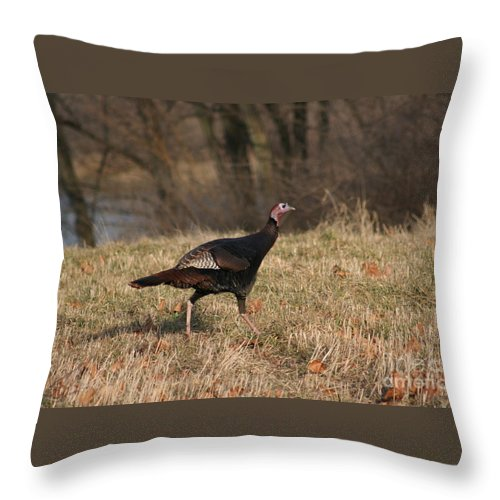 Turkey Throw Pillow featuring the photograph Turkey Run by Roger Look