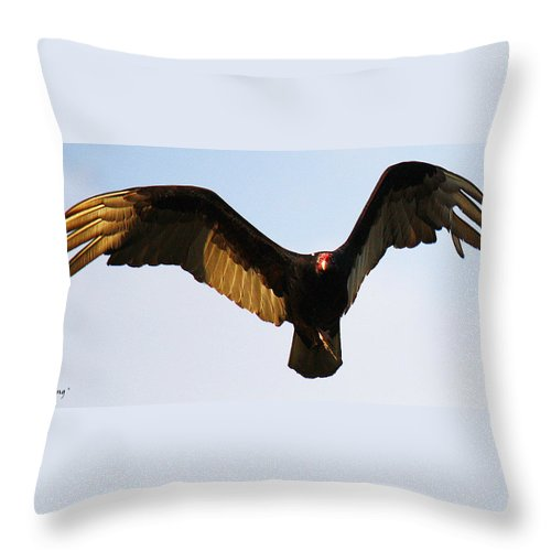 Roena King Throw Pillow featuring the photograph Turkey Vulture Evening Flight by Roena King
