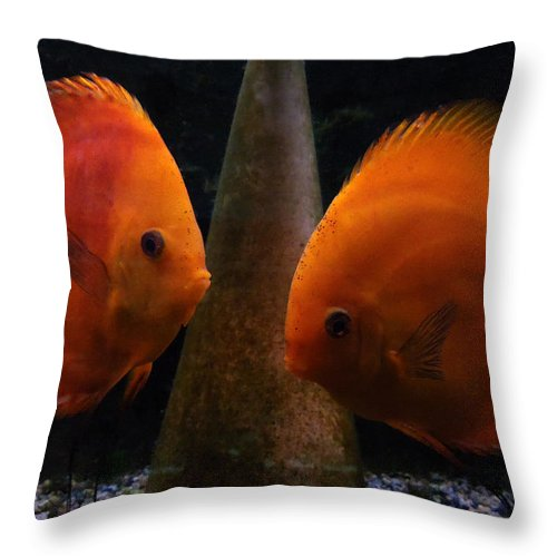 Colette Throw Pillow featuring the photograph Twin Friends Malboro Fish by Colette V Hera Guggenheim