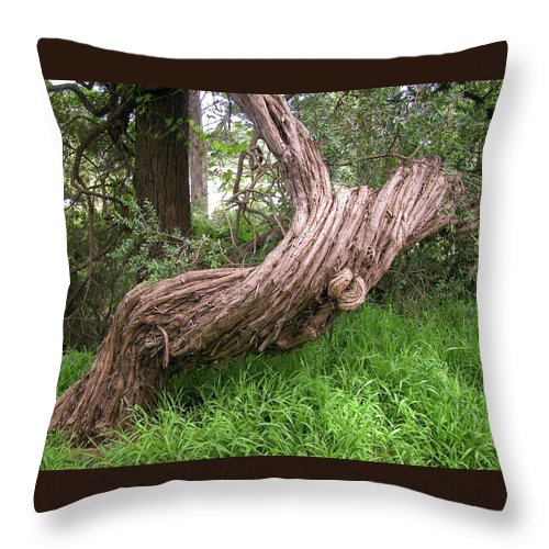 Tree Throw Pillow featuring the photograph Twisted Tree 1123 by Guy Whiteley