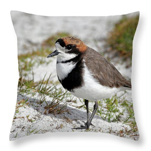 Flpa Throw Pillow featuring the photograph Two-banded Plover Charadrius by Martin Withers