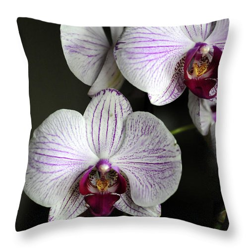 Orchids Throw Pillow featuring the photograph Two By Two by Wanda Brandon